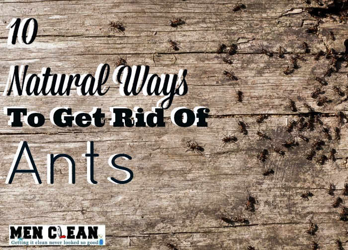 10 Natural Ways To Get Rid Of Ants